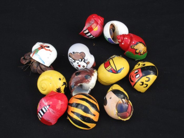 Large Hermit Crab in Painted Shells (Specialty)