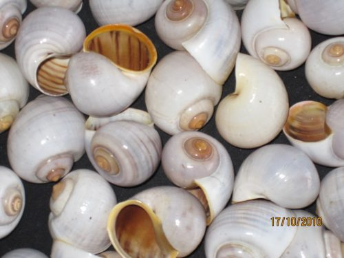 Buble Shell