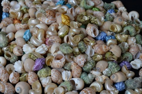 Hermit Crab Small Assorted Fancy Shells