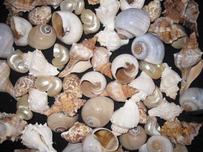 Hermit Crab Medium Fancy Shells